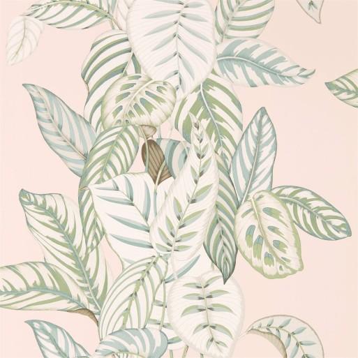 Calathea Orchid / Eucalyptus