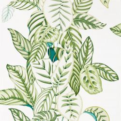 Calathea Botanical Green