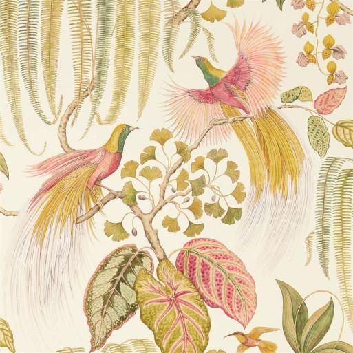 Bird Of Paradise Olive