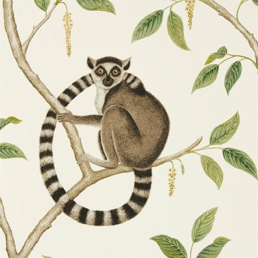Ringtailed Lemur Cream / Olive