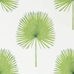 Fan Palm Botanical Green