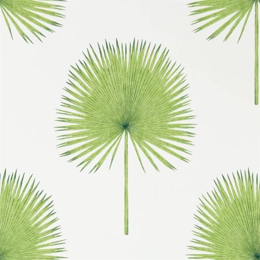 Fan Palm Botanical Green