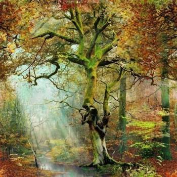 Sous bois forêt