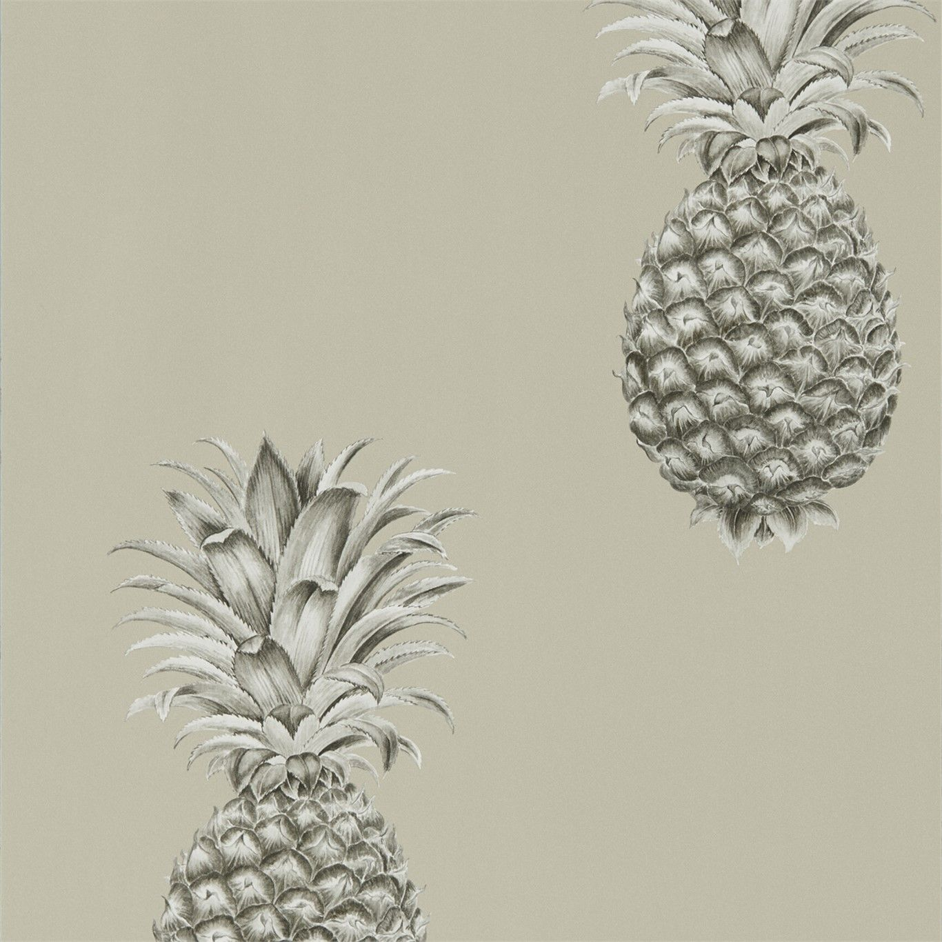 Pineapple Royale Charcoal / Champagne
