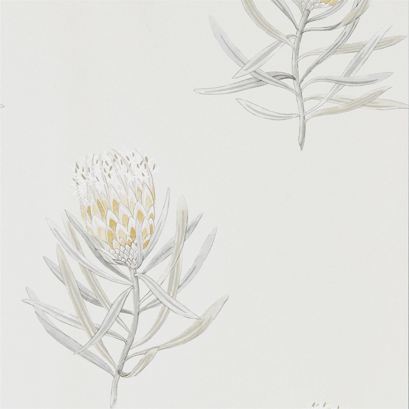 Protea Flower Porcelain / Blush