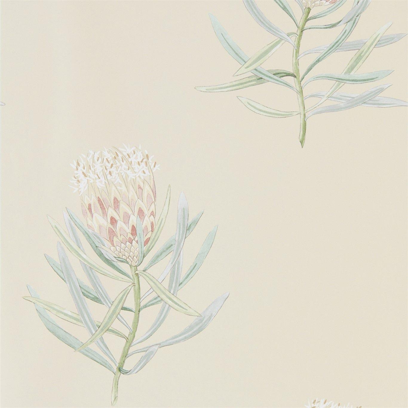 Protea Flower Russet / Green