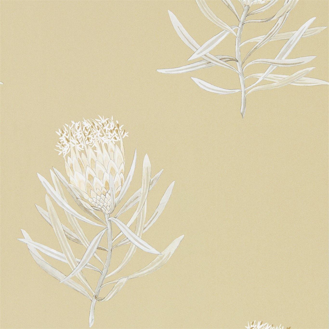 Protea Flower Sepia / Champagne
